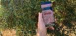 Sensonomic: tecnología fiable y útil para la estimación de aforo y mejora continua en el manejo de cultivo