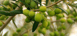 Harvest Planning, el software de Sensonomic para planificar la cosecha