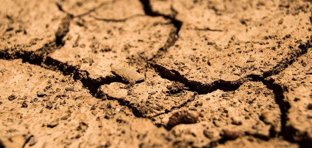 Los Estados Miembros acuerdan medidas de apoyo para los agricultores afectados por la sequía