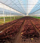 El sector de equipamiento y maquinaria agrícola muestra su oferta en Marruecos