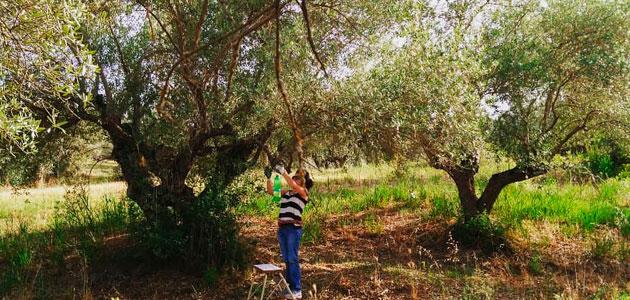 Soluciones ecológicas para que los olivares resistan a las condiciones climáticas cambiantes