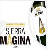 La DOP Sierra Mágina adelanta la cosecha para garantizar la calidad de sus vírgenes extra