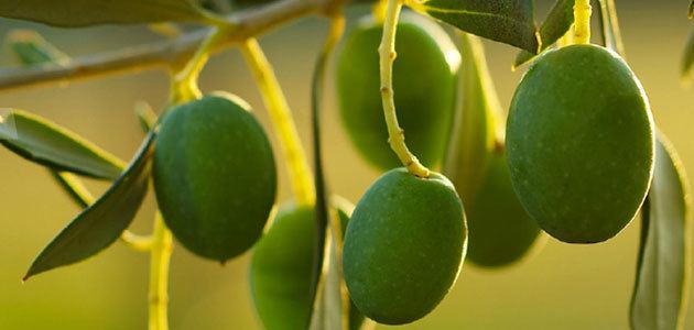 Jaén acogerá en diciembre el 3RD International Yale Symposium on Olive Oil & Health