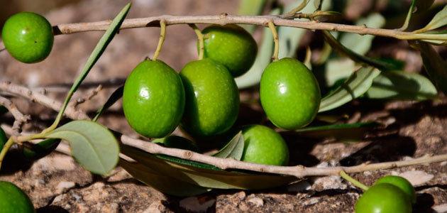 Bruselas prevé un stock final de campaña para España de 351.200 t. de aceite de oliva