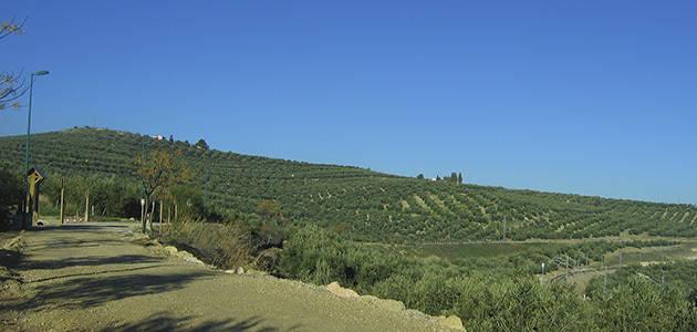 La tradición y cultura del AOVE serán reconocidos en un concurso de fotografía de la DO Montes de Granada