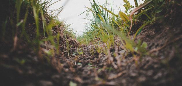 SQAPP: La app que ayuda a los agricultores a mejorar la calidad de los suelos