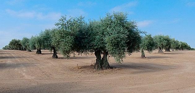 El MAPA avanza en la mejora de la fertilización de los cultivos