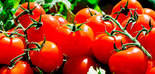 Un estudio demuestra el beneficio del aceite de oliva junto con el tomate frente al cáncer de colon