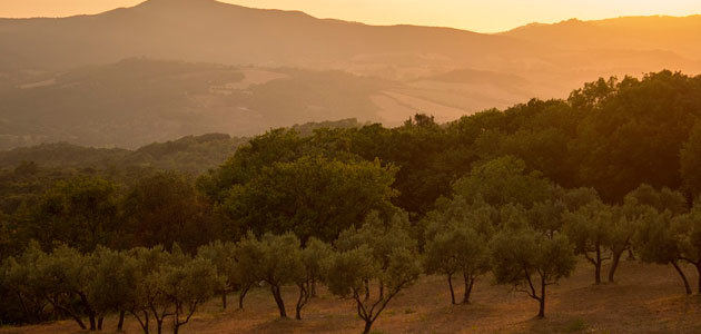 La producción europea de aceite de oliva se sitúa en 2,17 millones de t. hasta febrero