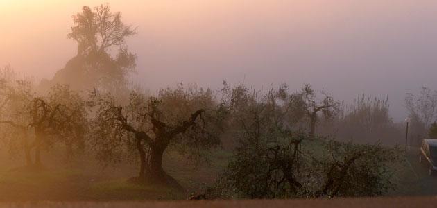 Italia a la vanguardia: GeOEVO y nutracéuticos