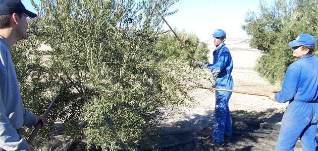 Crespo aborda con el sector oleícola la normativa anti-Covid con motivo del inicio de la campaña de recogida