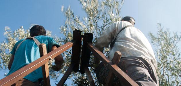 Andalucía edita un folleto informativo destinado a trabajadores y empresarios agrícolas para prevenir el COVID-19