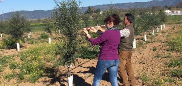 Arranca 'Transforma Olivar': experimentación, cooperación y transferencia de tecnología en el olivar