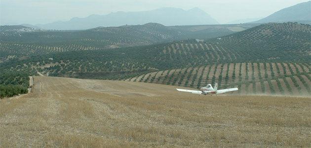 La DOP Sierra Mágina obtiene luz verde para el tratamiento aéreo contra la mosca del olivo