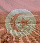 La UE suspende la presentación de solicitudes de certificados de importación de aceite de oliva de Túnez