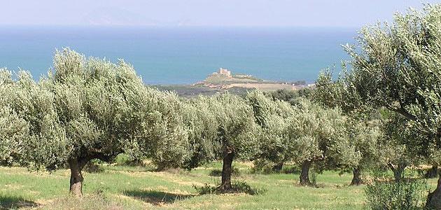 La UCO aportará su experiencia sobre geomática aplicada a la agricultura de Túnez