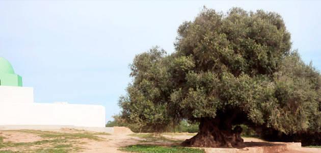 La innovación tecnológica en el sector del aceite de oliva, a debate en Túnez