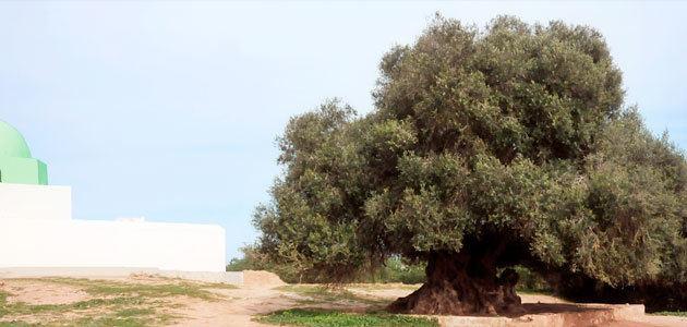 """Túnez acoge la presentación de la versión en árabe del manual """"La olivicultura internacional"""""""