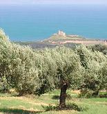 El Copa-Cogeca, en contra del plan de incrementar el contingente de importación de aceite de oliva de Túnez