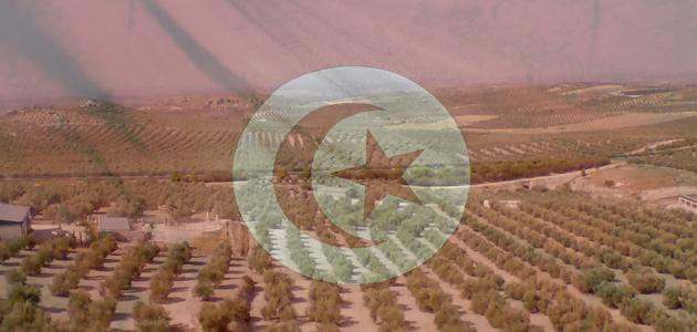 Túnez registra récord de exportaciones de aceite de oliva con 190.000 t. hasta abril