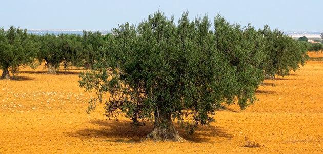 SustainFARM, un proyecto para aumentar el rendimiento agronómico de los sistemas de producción alimentaria