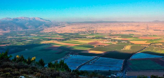 Detectado el primer caso de Xylella fastidiosa en Israel