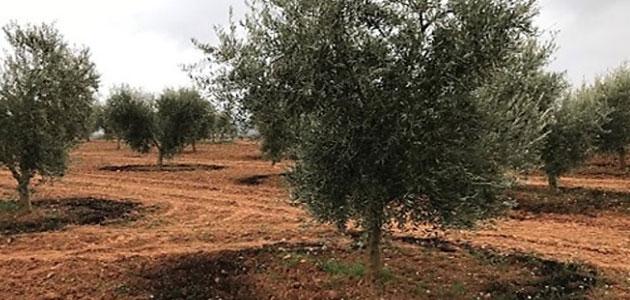 Valorares: regenerar la tierra e incrementar la productividad de cultivos como el olivar