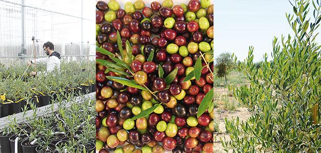 Jaén acogerá el primer congreso sobre agroseguridad en el olivar