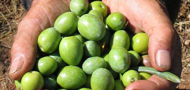 Arranca un verdeo temprano, corto y con importantes novedades, según COAG