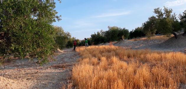 La diversificación del olivar protagoniza una jornada del proyecto Diverfarming