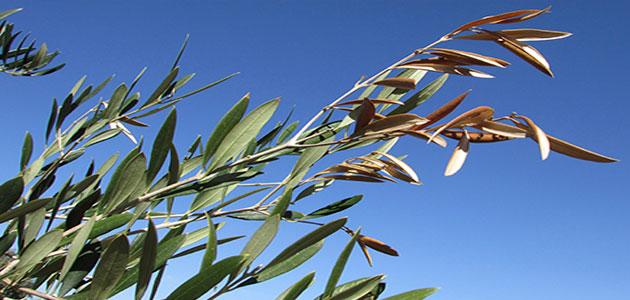 Preguntas y respuestas sobre la nueva normativa fitosanitaria en la UE
